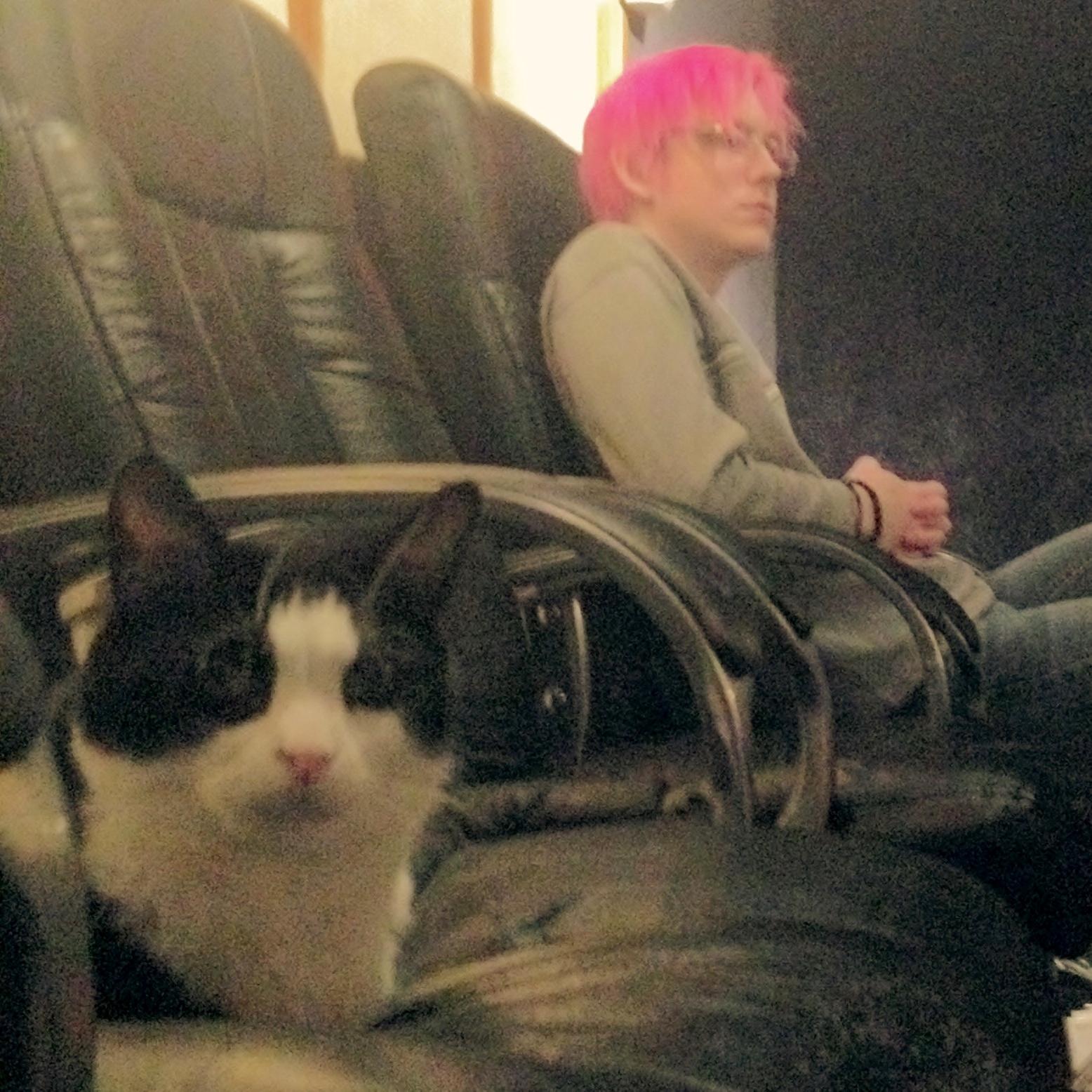 Shuichi and Roman the studio cat
